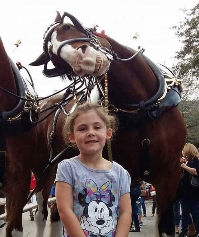 девочка рядом с лошадью