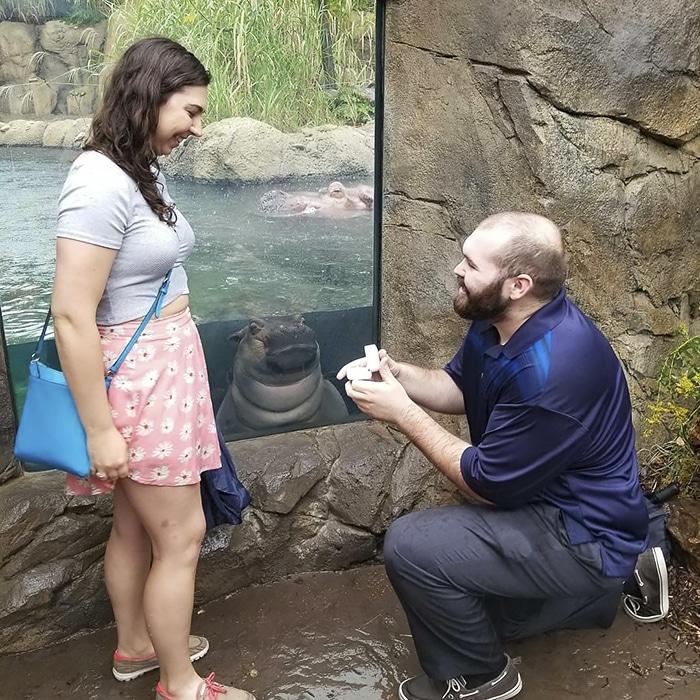 свадебные фото, свадебные фото с животными рис 2