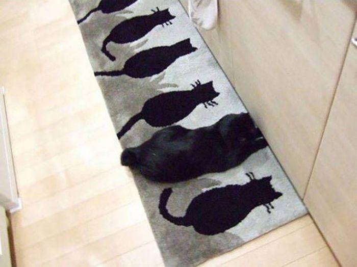 черный кот на ковре