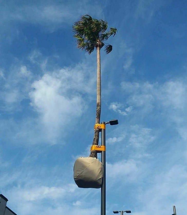 пальма на фонаре