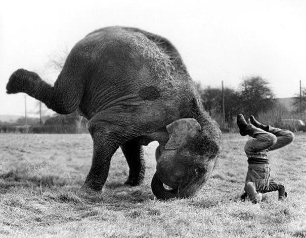 мужчина и слон