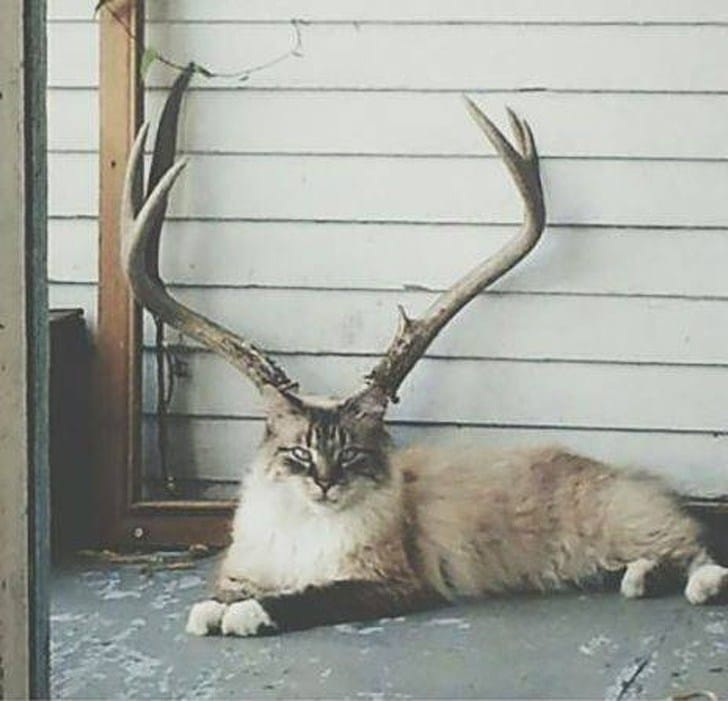 кот с рогами оленя
