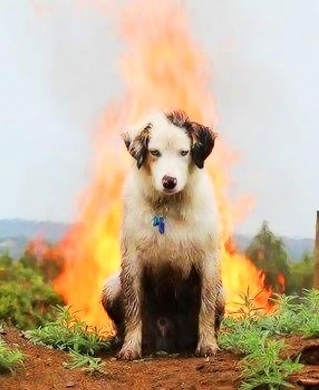 собака на фоне костра