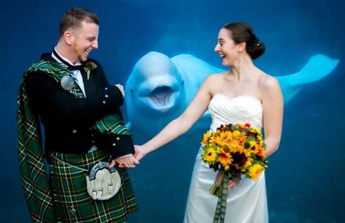свадебные фото, свадебные фото с животными рис 5