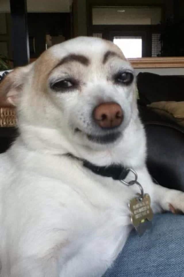 собака с бровями рис 2
