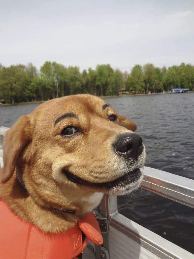 рыжая собака с бровями рис 2