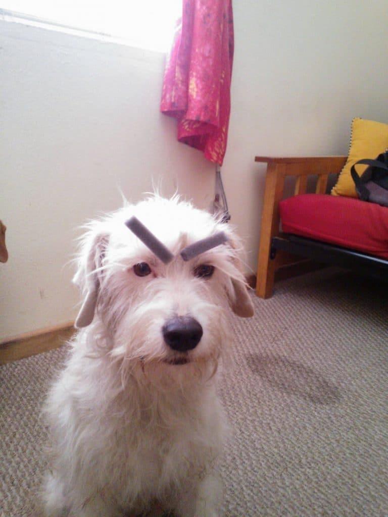 собака с бровями рис 4