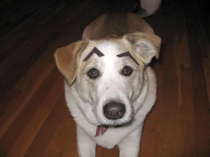 собака с бровями рис 3