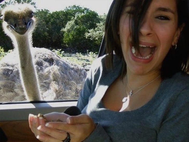 кормить страуса