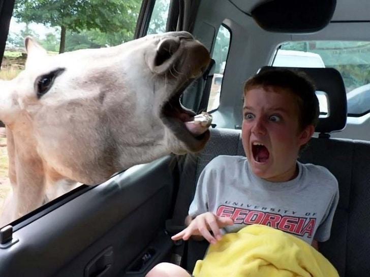 страшная лошадь
