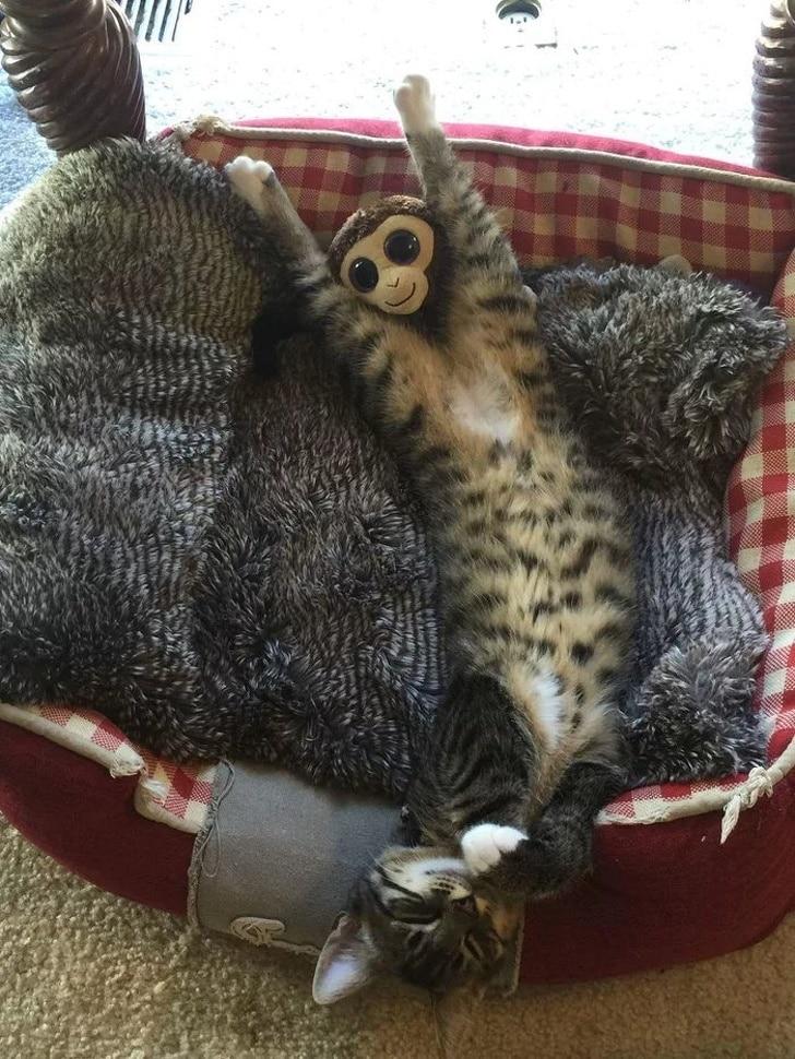 кот или мартышка