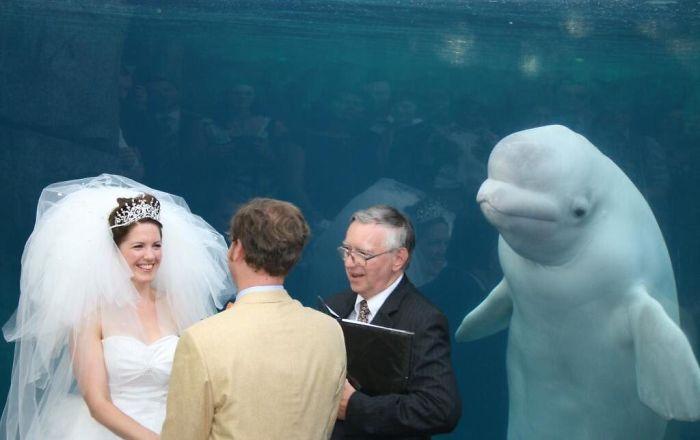 свадебные фото, свадебные фото с животными рис 8