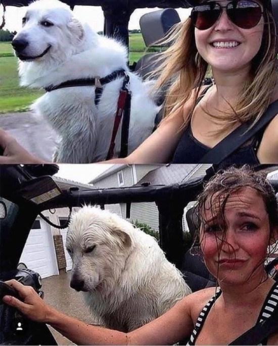 девушка с собакой в машине