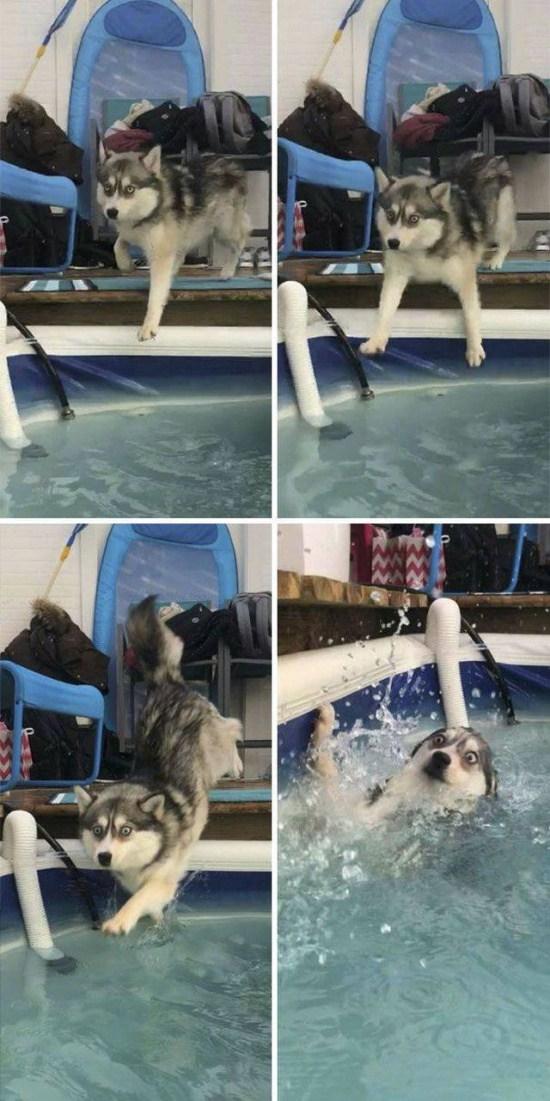 собака упала в бассейн