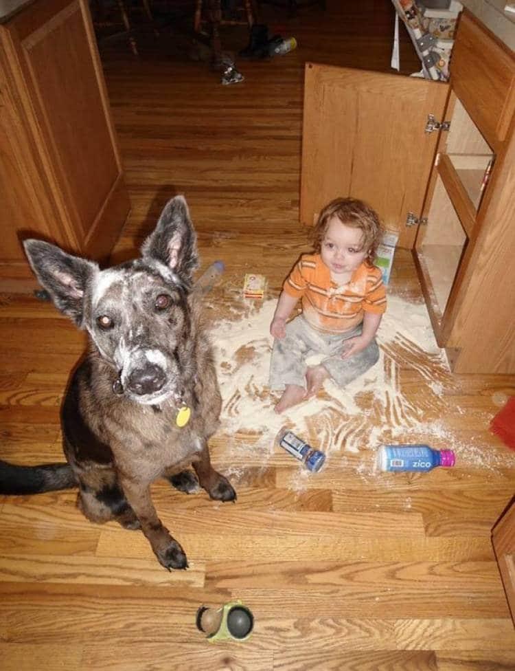 ребенок и собака в кухне
