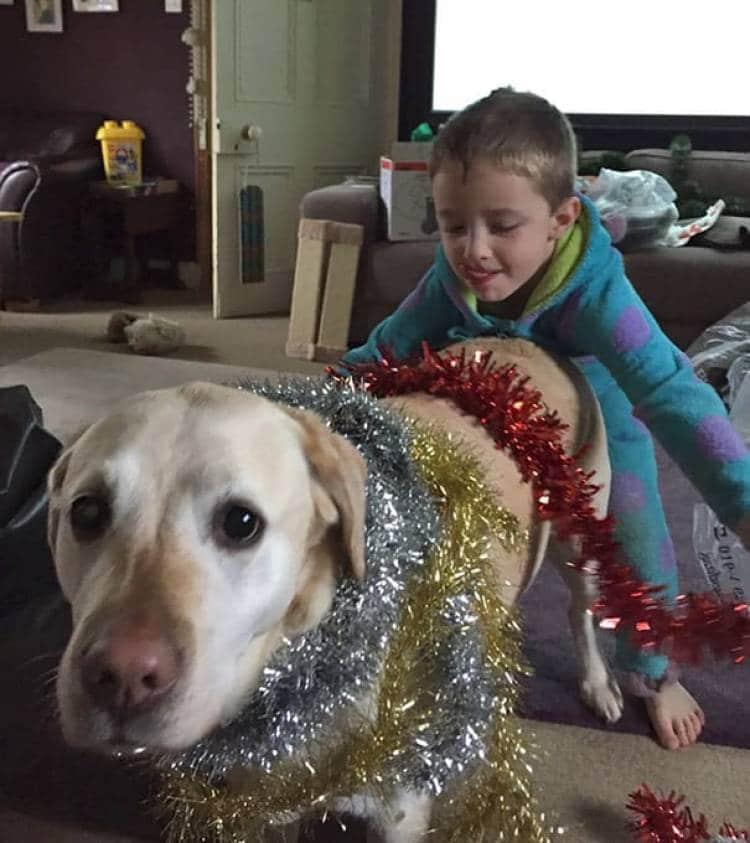 собака в новогоднем дождике