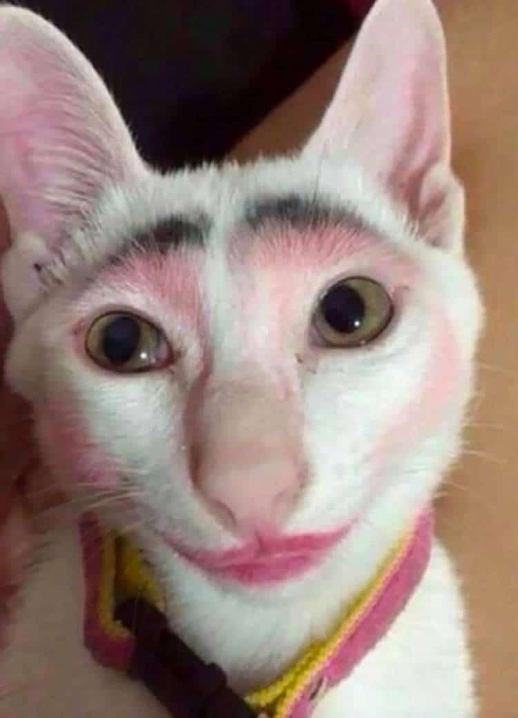 белый кот в помаде