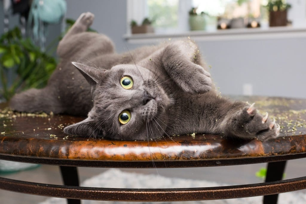 коты, коты фото, коты приколы рис 11