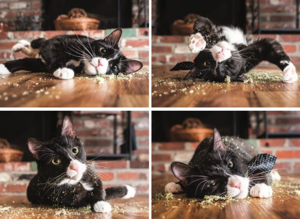 коты, коты фото, коты приколы рис 18