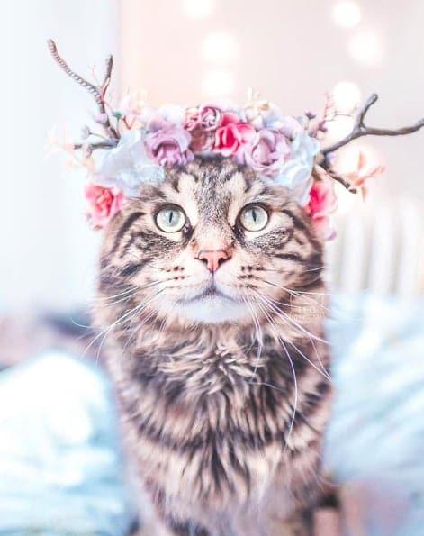 кошки, кошки фото, кошки красивые фото рис 2