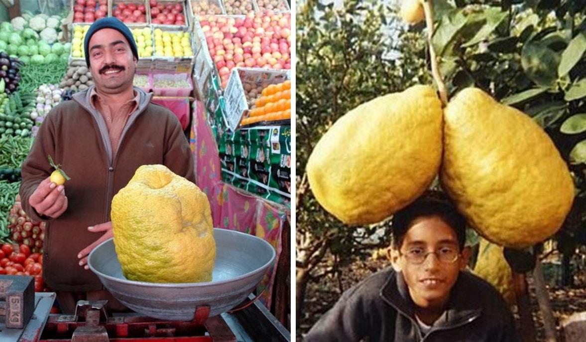 мужчина положил на весы огромный лимон