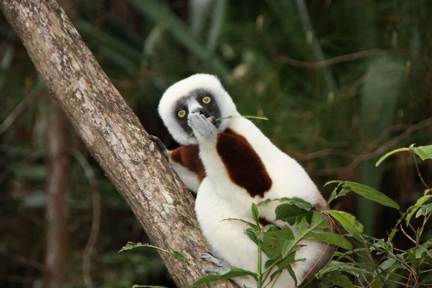 смешное животное на дереве