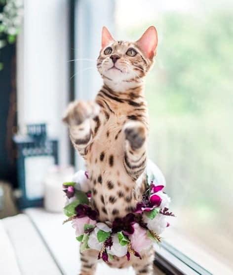 кошки, кошки фото, кошки красивые фото рис 3