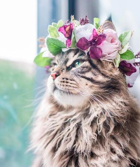 кошки, кошки фото, кошки красивые фото рис 4