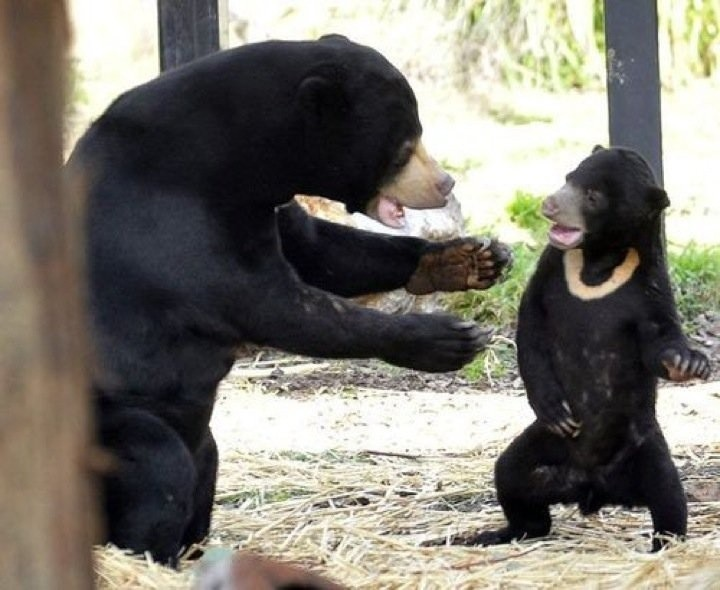 медведица с медвежонком