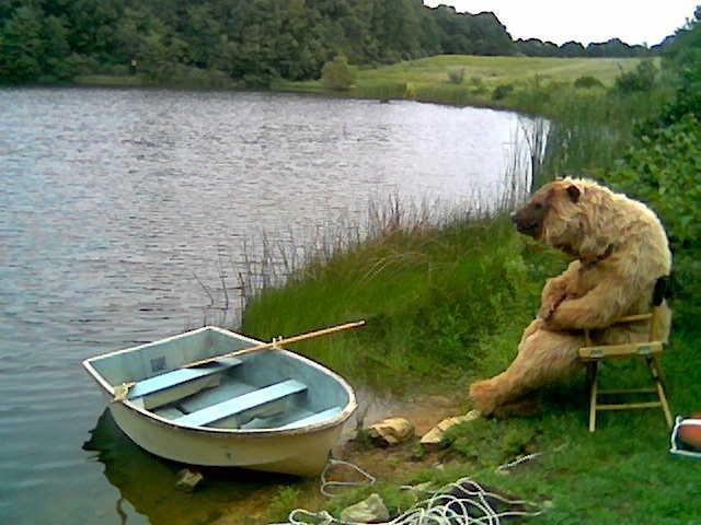 медведь на берегу реки