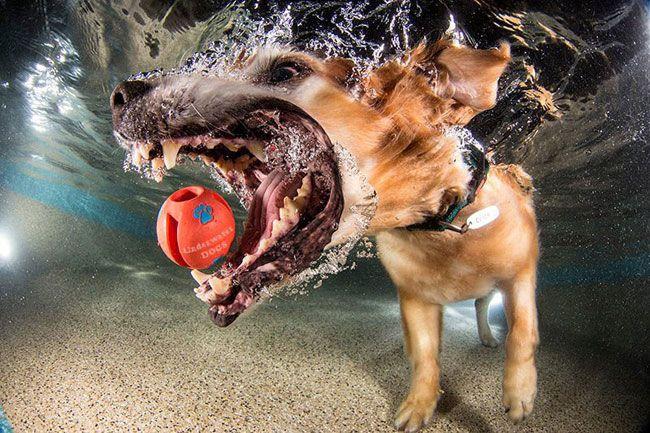 собака ловит мяч под водой