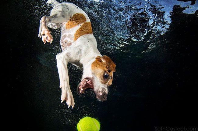 собака ныряет за мячом