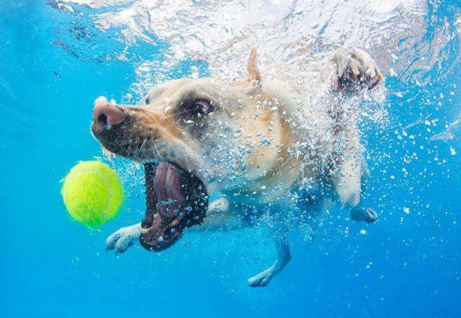 пес гонится за мячом под водой