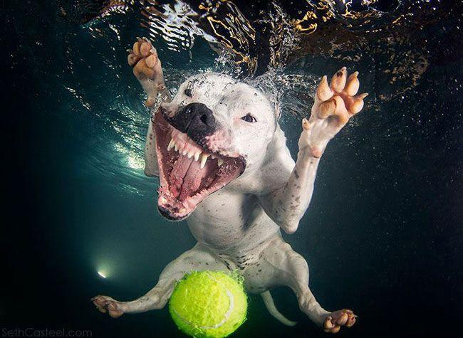 пес с мячом под водой