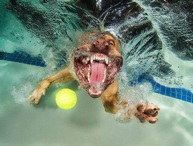 собака с мячом под водой рис 2