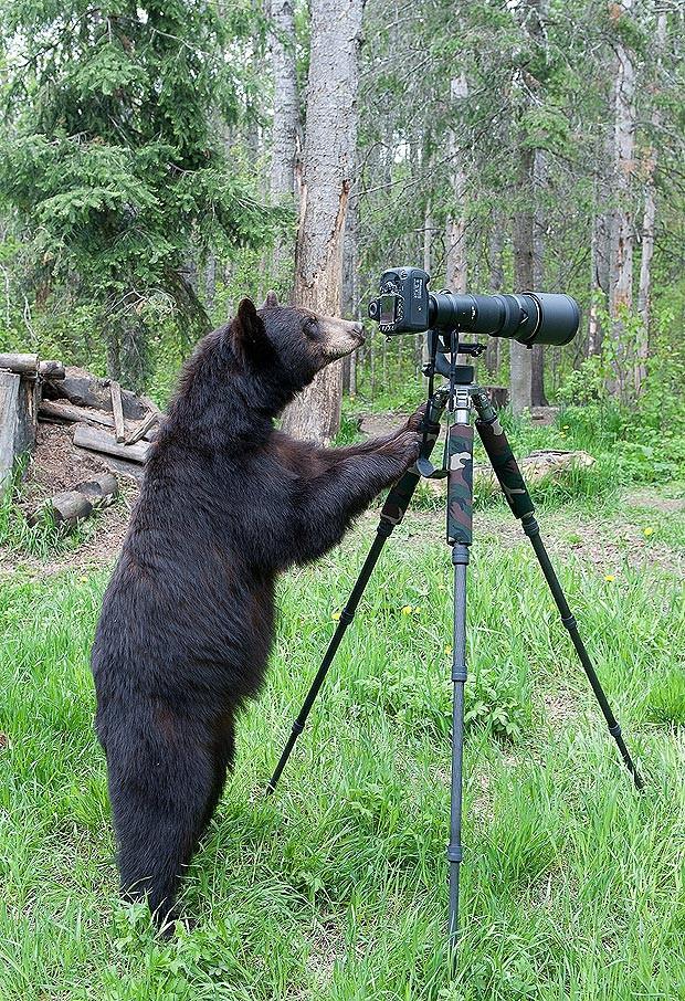 медведь с фотоаппаратом
