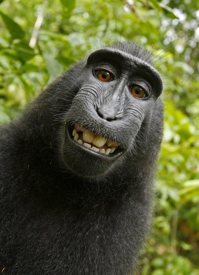 обезьяна улыбается