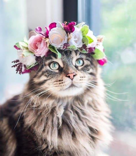 кошки, кошки фото, кошки красивые фото рис 5