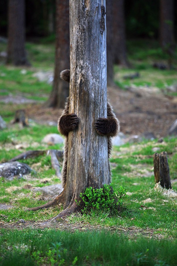 медвежонок за деревом