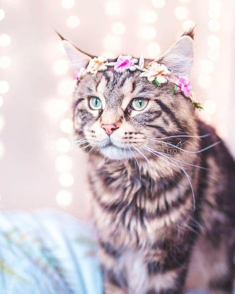 кошки, кошки фото, кошки красивые фото рис 6