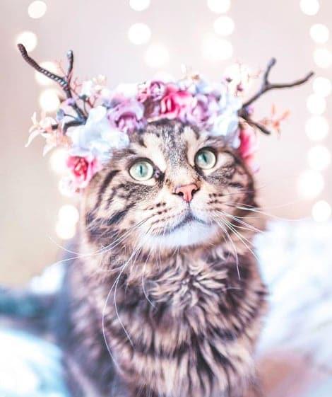 кошки, кошки фото, кошки красивые фото рис 7