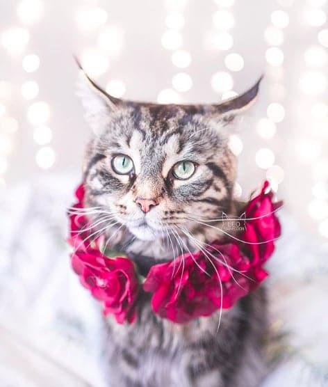 кошки, кошки фото, кошки красивые фото рис 8