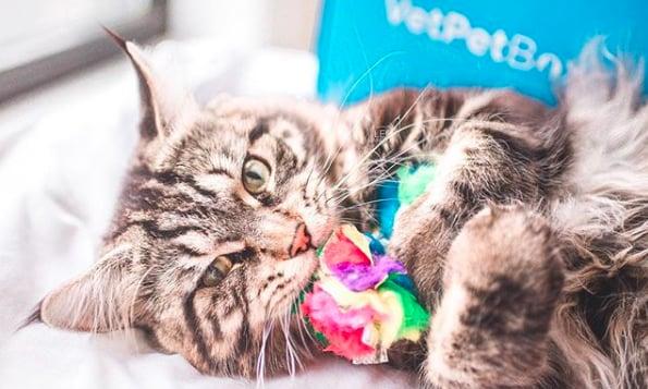 кошки, кошки фото, кошки красивые фото рис 9