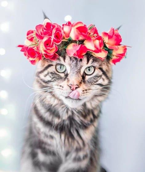 кошки, кошки фото, кошки красивые фото рис 10
