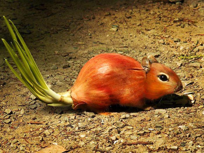 мышь с телом луковицы