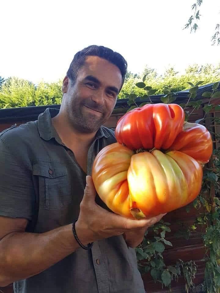 мужчина держит огромный помидор