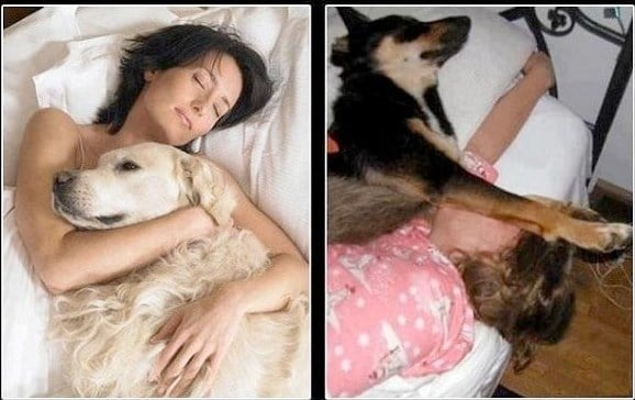 хозяин и собака в кровати