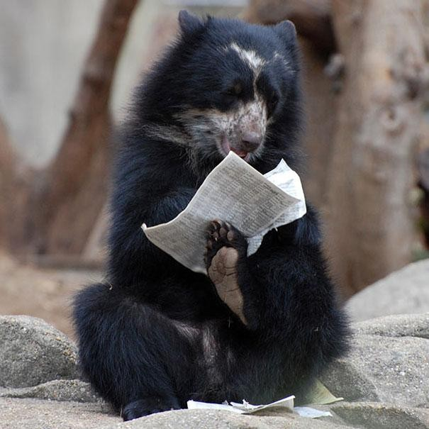медведь с газетой