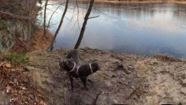 панорамное фото: двуглавый пес