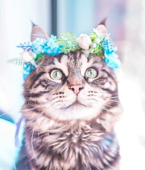 кошки, кошки фото, кошки красивые фото рис 11